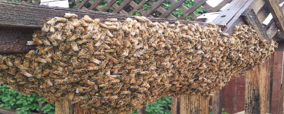 Have A Bee Problem?