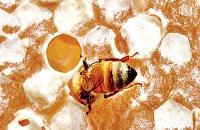 12-bees-2.nocrop.w529.h767.2x